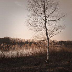 Herbstzeit von Lena Weisbek