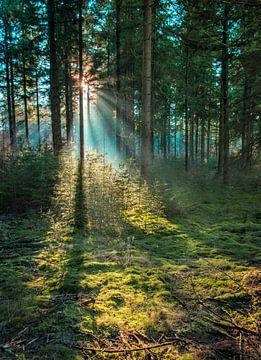 Zonnestralen door het bos van Victor Droogh