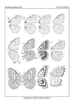 Flügel-Studie A von Zoë Hoetmer