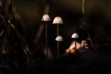 Mini mushrooms van Menko van der Leij