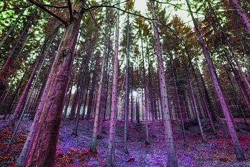 In het bos van Max Steinwald