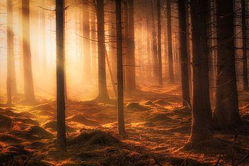 Herfst bos in de mist op een mooie oktober ochtend van Bas Meelker