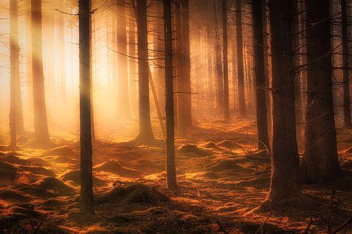 Herfst bos in de mist op een mooie oktober ochtend