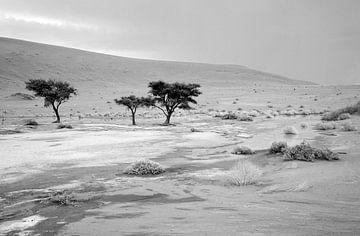 Deathvlei in Namibië na een zeldzame regenbui van