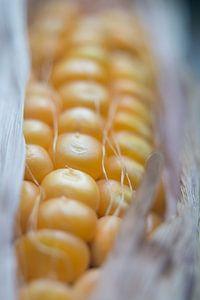 close up van een maiskolf