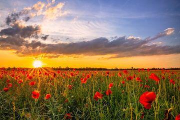 Sonnenuntergang über malerischem Mohnblumenfeld von Achim Thomae