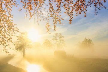 Een prachtige mist hangt over het landschap bij Landgoed Nienoord in Leek van Bas Meelker