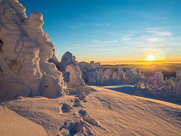 Winterlandschap in het Ertsgebergte op de Fichtelberg van Animaflora PicsStock