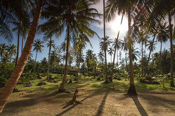 Palmengarten auf Ko Kut