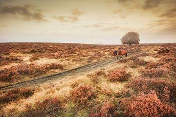 Paarden lopen door heide in herfst van Frans Lemmens