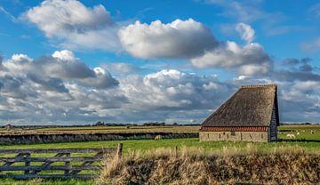 Schapenboet - Texel sur