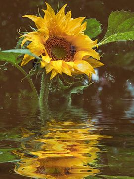 Sonnenblumenöl von Christine Nöhmeier