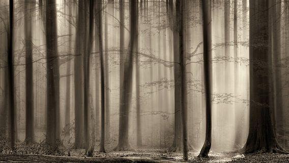Het Transparante Bos, The Cloaking Woods van Lars van de Goor
