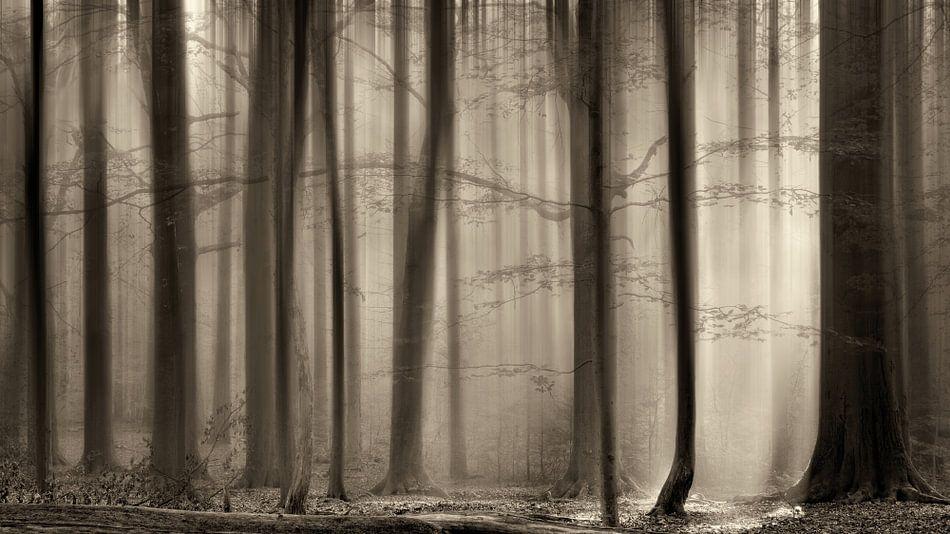 Het Transparante Bos, The Cloaking Woods