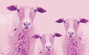 Sheep vun Diek - Schafe vom Elbdeich  van Deern vun Diek