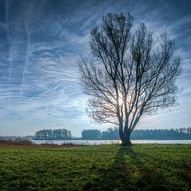 Boom in winter seizoen bij Geestmerambacht in Tegenlicht Nederland van Sven van der Kooi (kooifotografie)