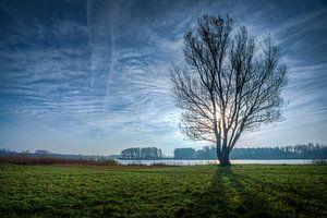 Baum in der Wintersaison bei Geestmerambacht in Tegenlicht Niederlande von Sven van der Kooi