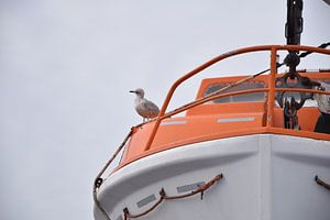 meeuw op reddingsboot van Jeroen Franssen