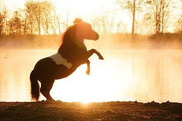 steigerend paard aan het water bij zonsopgang