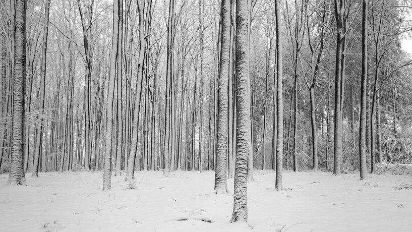 Winter in Limburg II van Teun Ruijters