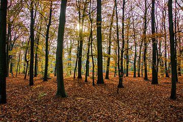Herbstwald von Jose Gieskes