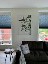 Klantfoto: Olijfboom | Olijftakken | Botanische foto van Mirjam Broekhof, op canvas