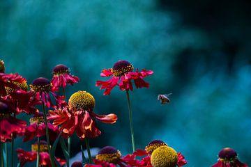 Bloemen en de bij (1) van Nathan Okkerse