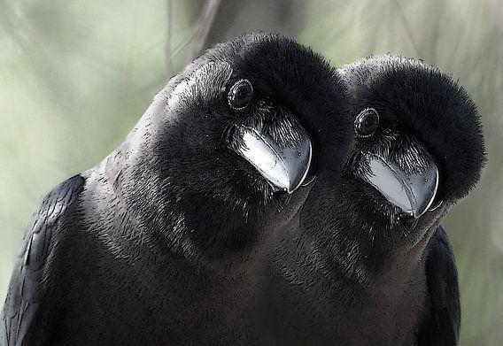 tweeling vogels