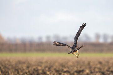 een roofvogel vliegt weg van Marc Goldman