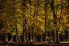 Herfstkleuren van Marc Smits thumbnail