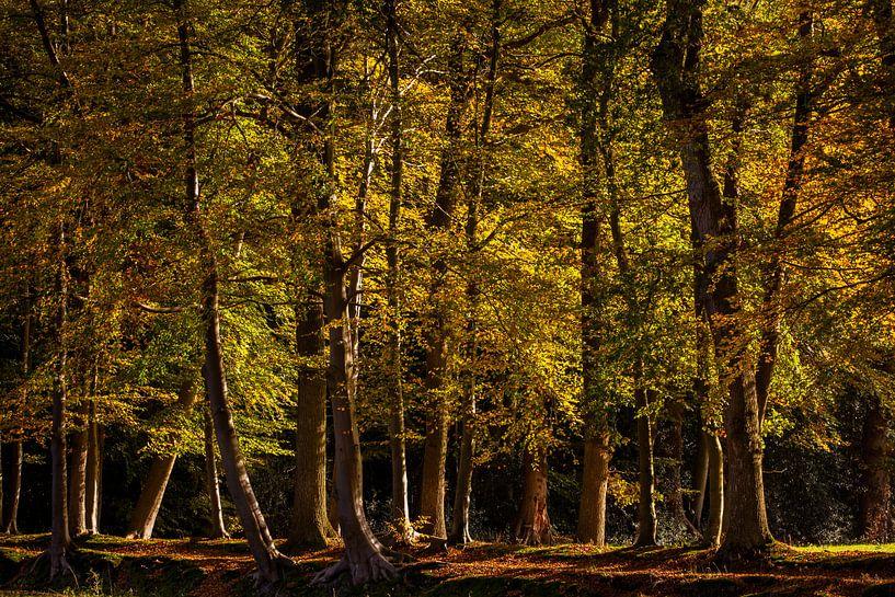 Herfstkleuren van Marc Smits
