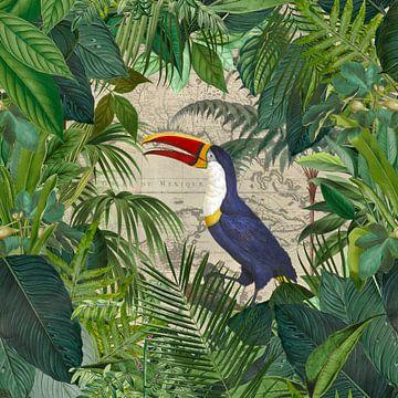 Tropische Reise  Des Tukans von Andrea Haase