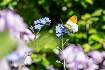 Vlinder in de tuin von Sylka Mannaert