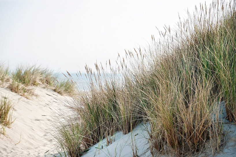 Dunes avec herbe plage et vue sur la mer sur Anouschka Hendriks
