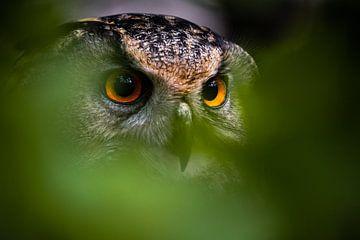 Verstoppen? van Tierfotografie.Harz