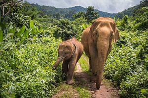 Aziatische olifanten in de Jungle