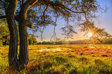 Sonnenuntergang auf dem Feld von Joost Lagerweij
