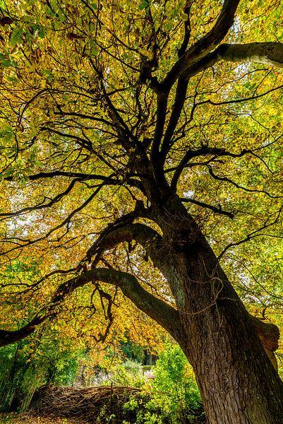 Kleurrijke bladeren van Marco Schep