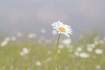 Blume im Bild von Wendy Boon