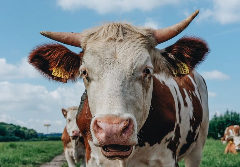 Smiling cow van Catharina Bee