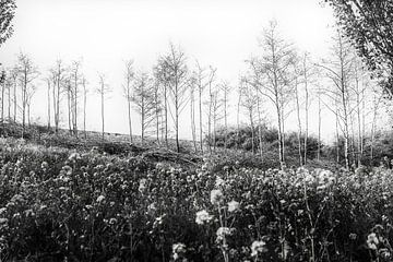 Junge Bäume im Frühjahr stehen zwischen ihren abgesägten Ästen von Goud Vis