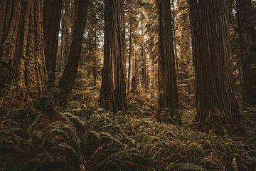 Le coeur de la forêt sur Joris Pannemans - Loris Photography