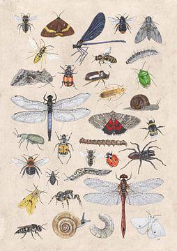 C'est plein d'insectes. sur Jasper de Ruiter