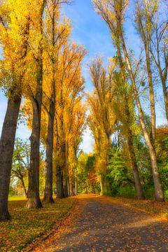 Herbst Allee van Dagmar Marina