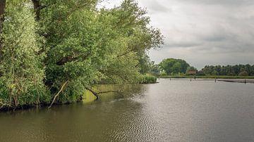 Bomen in de Brabantse Biesbosch von Ruud Morijn