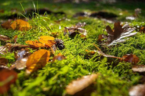 Groen tapijt met herfstkleuren