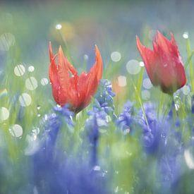 Tulpjes en blauwe druifjes in een bont mengsel, dromerige sfeer, flowerpower van simone opdam