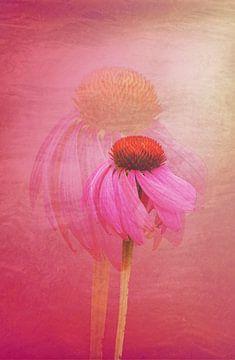 Echinacea doppel von Roswitha Lorz
