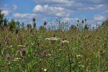 Een veld met kleurrijke wilde bloemen. van Jurjen Jan Snikkenburg