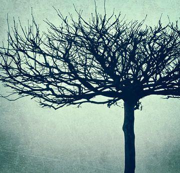 Plane tree - retrodesign van Kirsten Warner